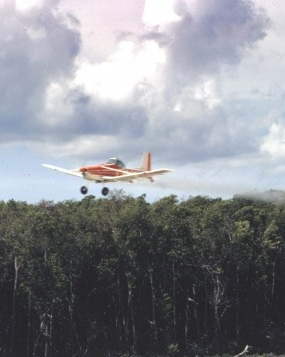 Cessna-in-mangrove-1-700x466_1.jpg