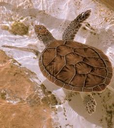 Cayman Islands News, Grand Cayman headline news, Cayman Turtle Farm
