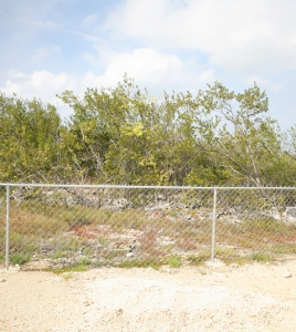 Protective fence surrounding Wash Wood Trees (268x300).jpg