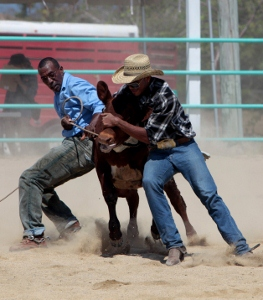 Rodeo_03_roping[1] (263x300).jpg