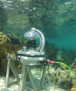 Webcam (253x300).jpg