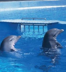 Cayman Islands News, Grand Cayman Island Headline News, Cayman captive dolphin facilities