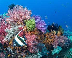 coral-reef-278x225.jpg