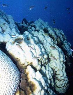 coral_bleaching_250373.jpg