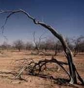 desertification.jpg