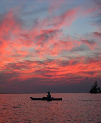 Cayman Islands News, Grand Cayman local news, Cayman Kayaks, Bioluminescence