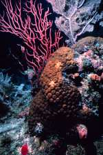 Cayman Islands News, Grnad Cayman science and nature, Cayman coral reefs