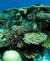 scott-reef-close.jpg