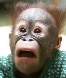 shocked monkey_1.JPG