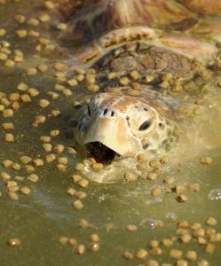 turtle feeding.jpg