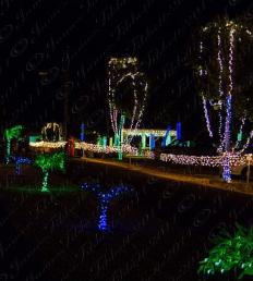 xmas lights.PNG
